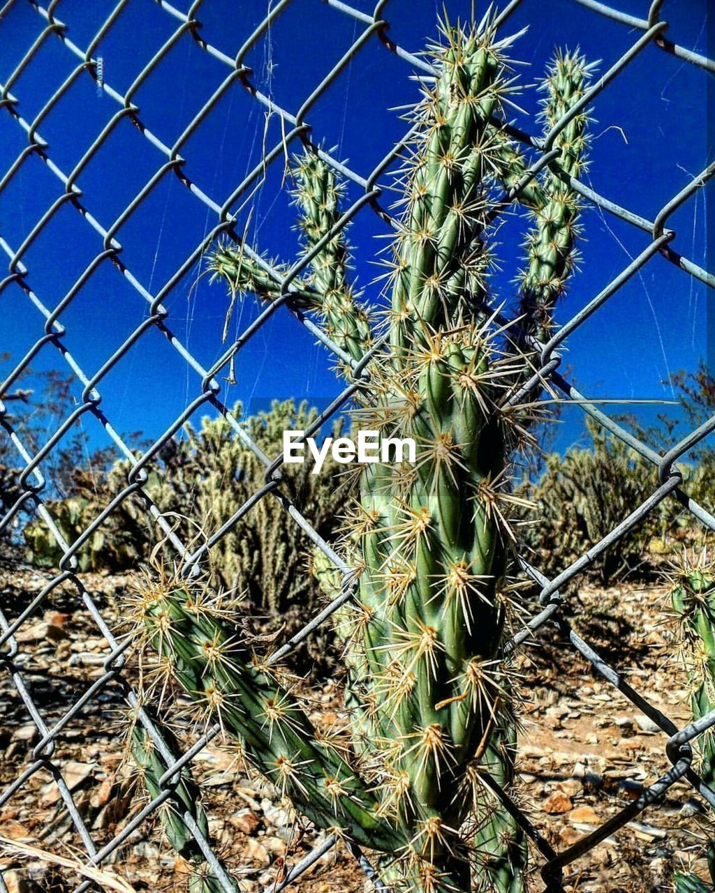 growth, plant, thorn, nature, cactus, spiked, day, no people, outdoors, danger, blue, close-up, beauty in nature