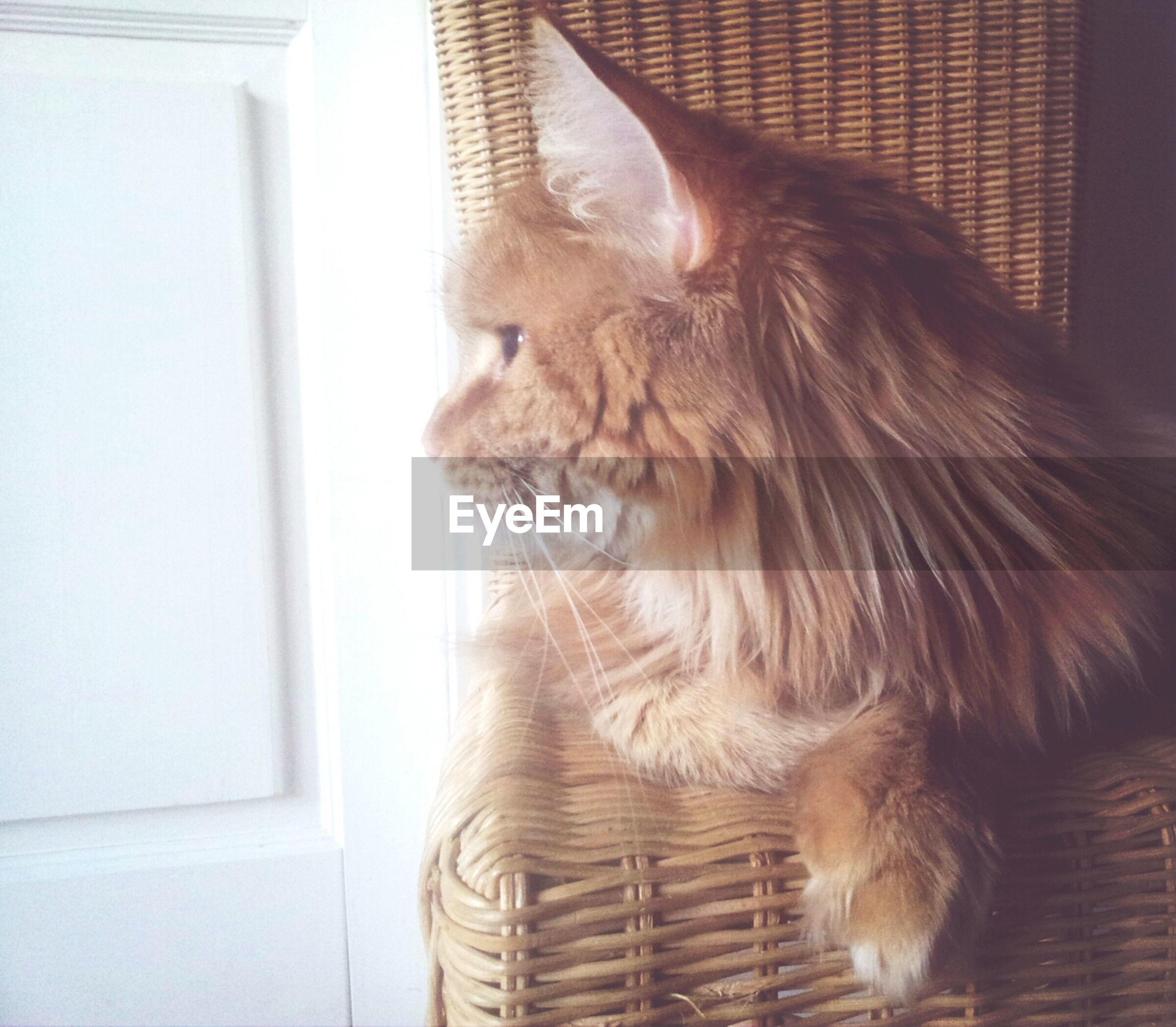 Cat lying in house
