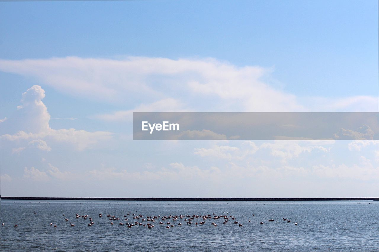 sky, cloud - sky, water, sea, beauty in nature, scenics - nature, tranquility, horizon, tranquil scene, nature, day, waterfront, horizon over water, no people, non-urban scene, idyllic, land, outdoors, beach, flock of birds
