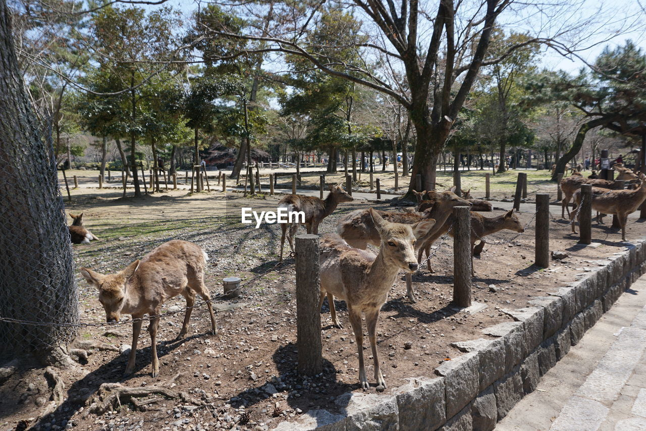 tree, group of animals, mammal, animal, animal themes, plant, vertebrate, nature, day, animal wildlife, animals in the wild, domestic animals, no people, barrier, boundary, trunk, land, field, sunlight, tree trunk, outdoors, herbivorous, herd