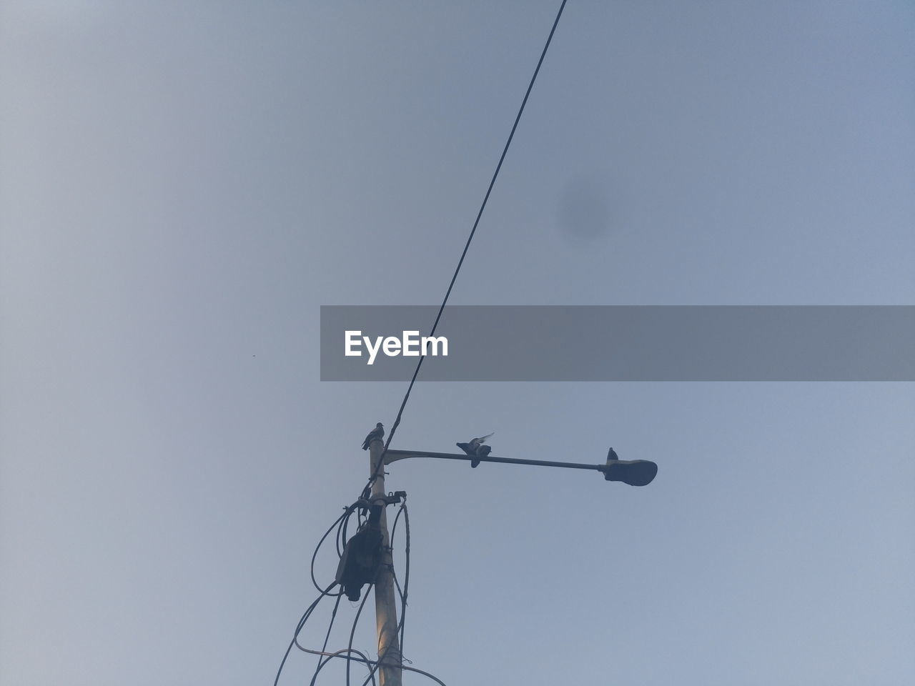 cable, electricity, connection, low angle view, power line, power supply, technology, fuel and power generation, day, no people, outdoors, clear sky, animal themes, telephone line, bird, nature, sky