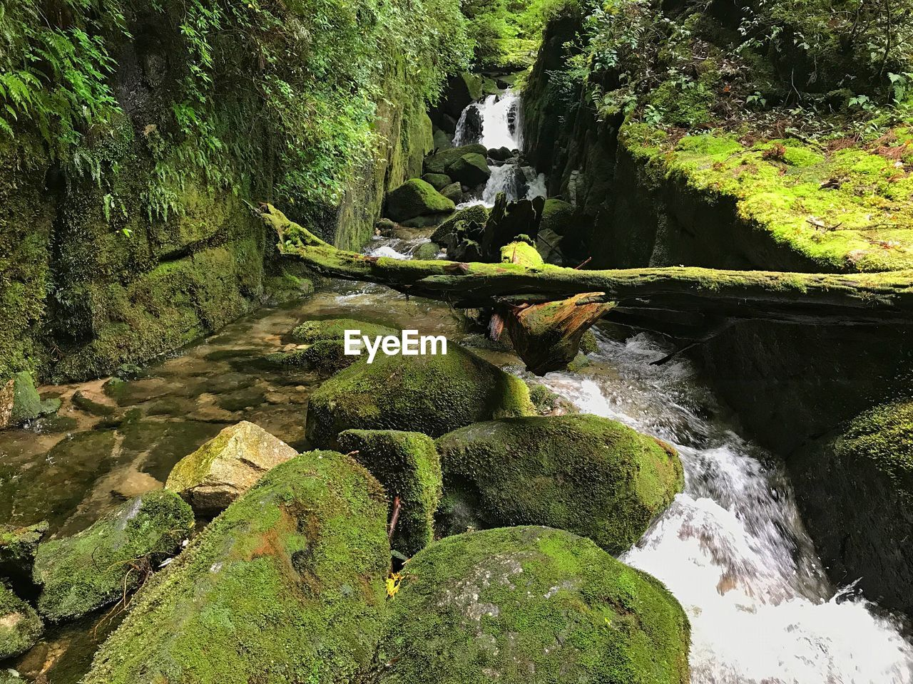 waterfall, nature, forest, rock - object, beauty in nature, green color, motion, water, tranquil scene, outdoors, no people, tranquility, moss, day, river, tree, scenics, growth