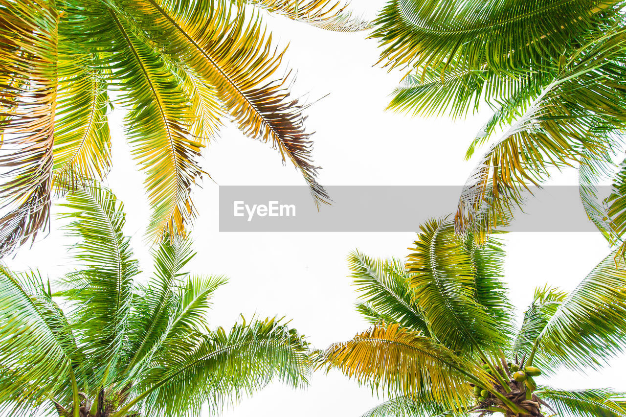tree, low angle view, nature, palm tree, green color, green, no people, growth, day, beauty in nature, outdoors, branch, close-up, sky, freshness