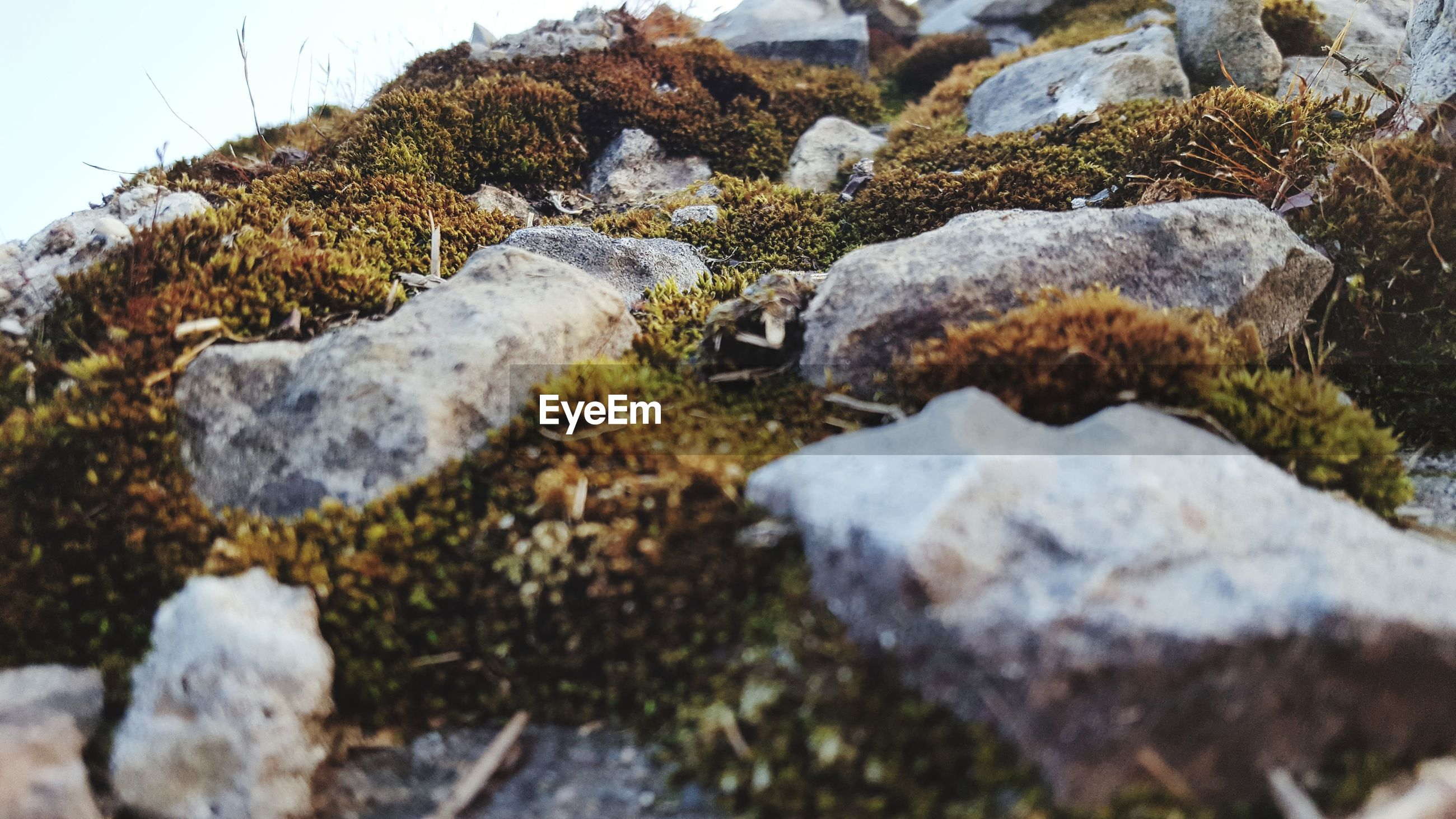 Close-up of moss growing by rocks on land