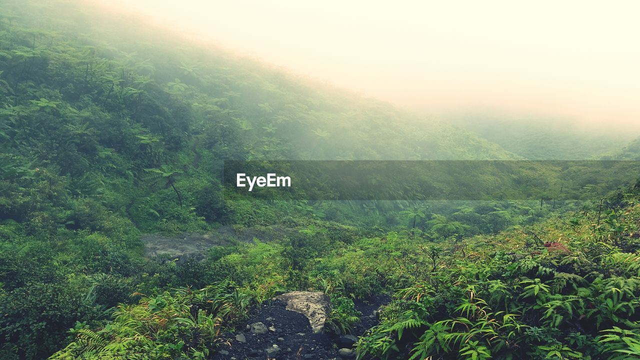 nature, tree, tranquil scene, beauty in nature, forest, tranquility, scenics, growth, landscape, plant, fog, lush foliage, outdoors, no people, green color, day, mountain, hazy, sky