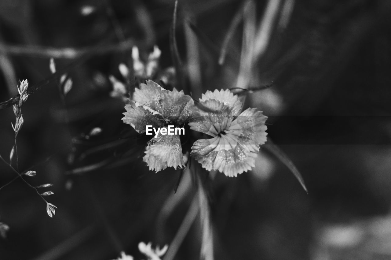 plant, flower, flowering plant, beauty in nature, growth, focus on foreground, fragility, close-up, vulnerability, freshness, nature, no people, day, inflorescence, petal, flower head, outdoors, selective focus, plant part, leaf