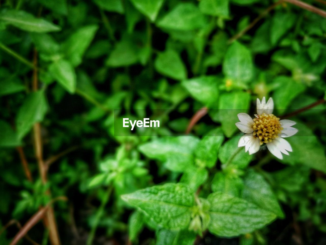 flower, growth, nature, plant, petal, fragility, green color, beauty in nature, leaf, flower head, freshness, no people, outdoors, day, blooming, close-up, animal themes