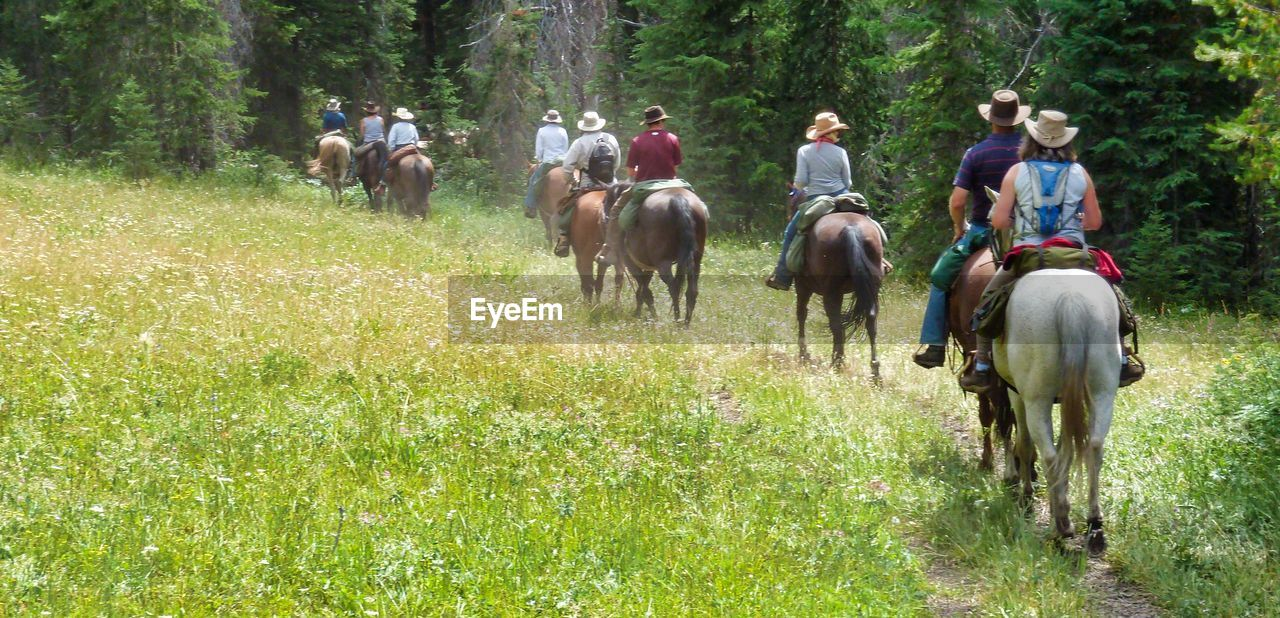 horse, domestic animals, horseback riding, riding, tree, livestock, field, mammal, grass, nature, outdoors, men, rural scene, people, forest, adult, day, real people, full length, one person, young adult, adults only
