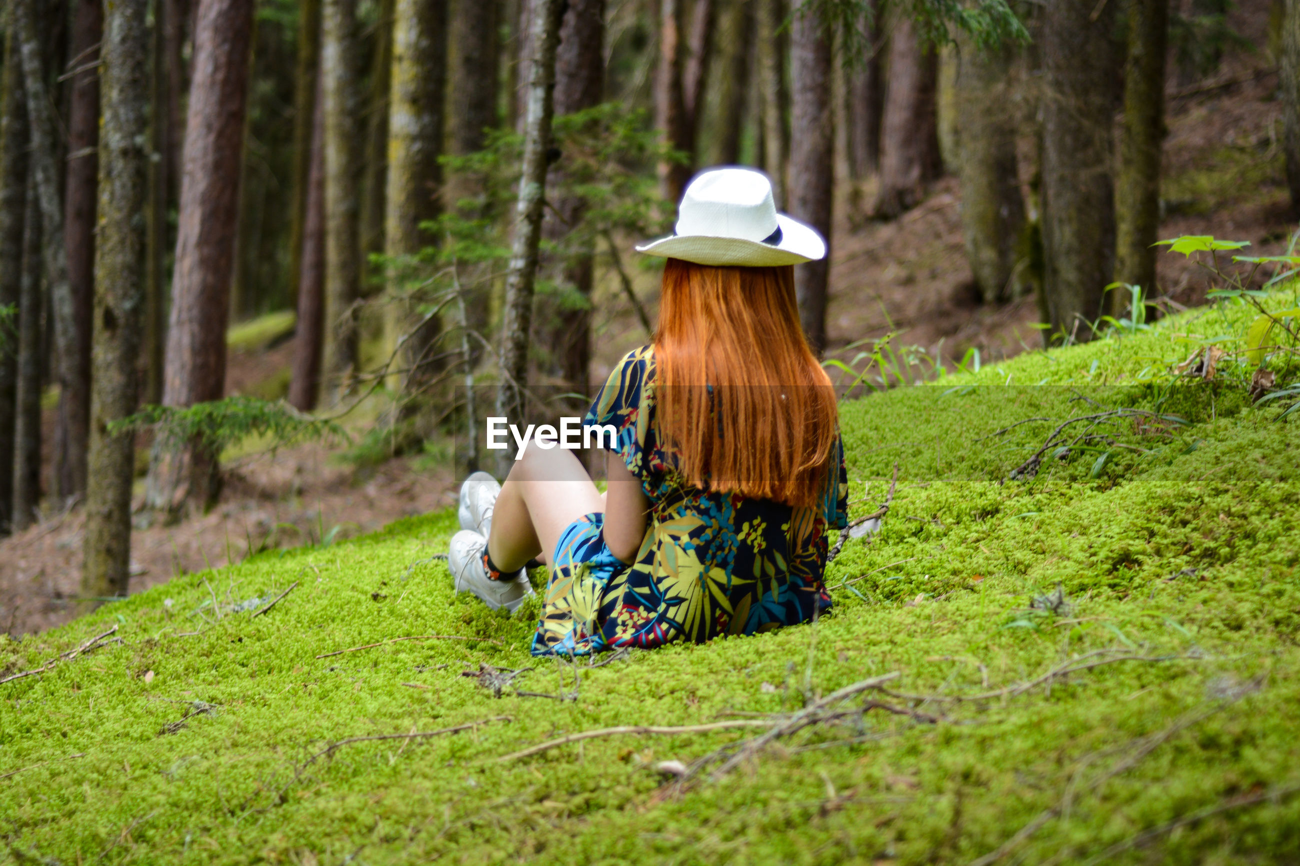 Rear view of woman wearing hat sitting on grass against tree trunks in forest