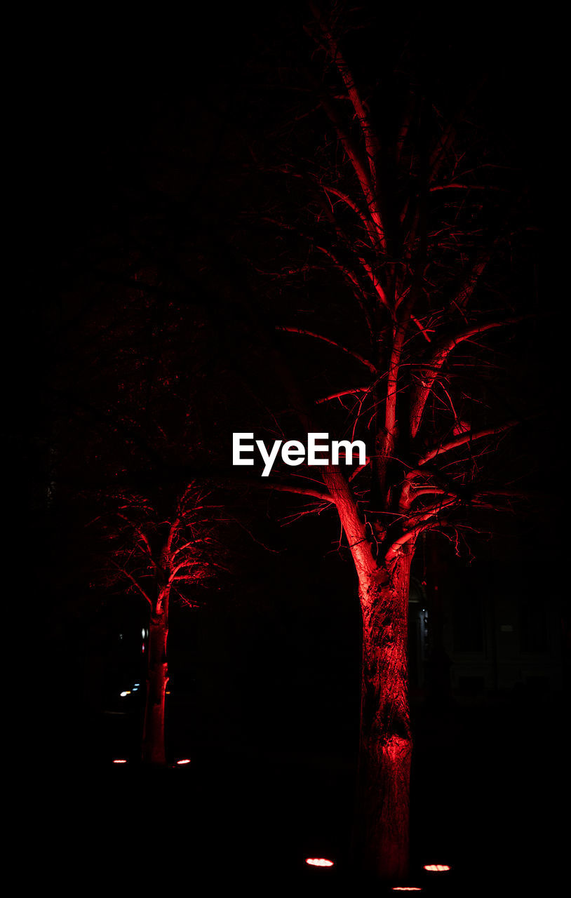 night, tree, illuminated, red, no people, celebration, nature, plant, dark, firework, outdoors, sky, event, low angle view, silhouette, motion, spooky, tree trunk, trunk, branch, black background, firework display, firework - man made object