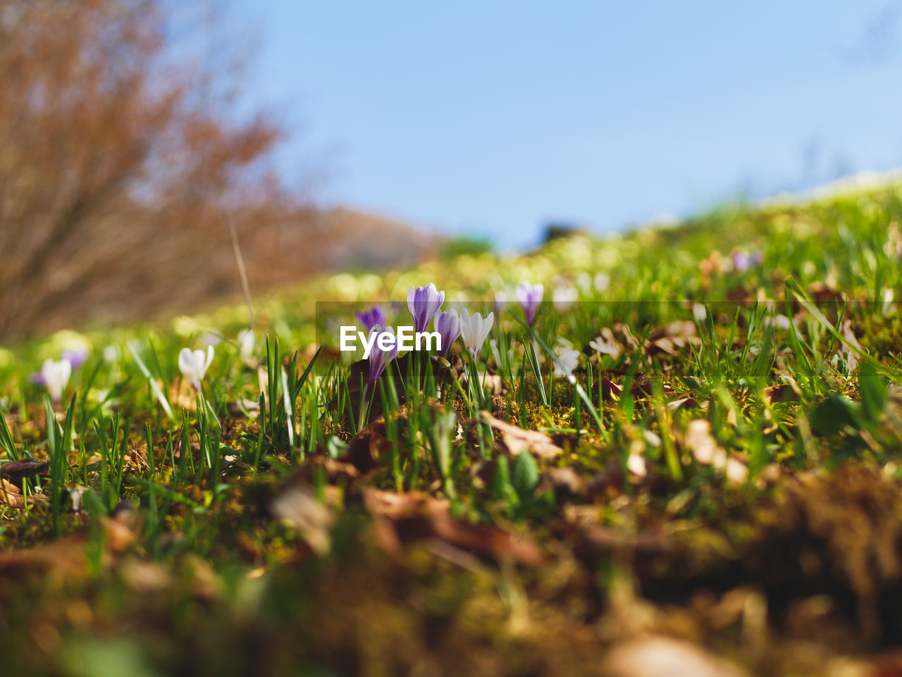 selective focus, plant, field, growth, land, nature, beauty in nature, grass, flower, green color, day, flowering plant, vulnerability, tranquility, surface level, close-up, fragility, no people, freshness, sky, outdoors