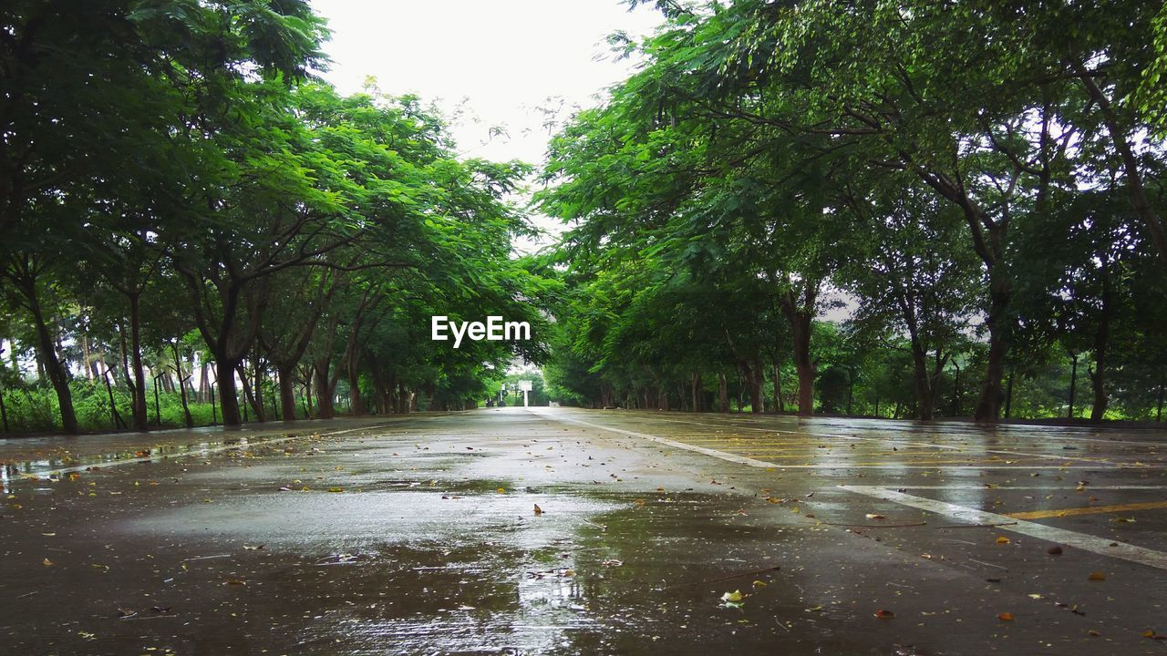 tree, water, plant, wet, nature, tranquility, growth, rain, no people, forest, beauty in nature, day, green color, tranquil scene, environment, scenics - nature, outdoors, reflection, rainy season