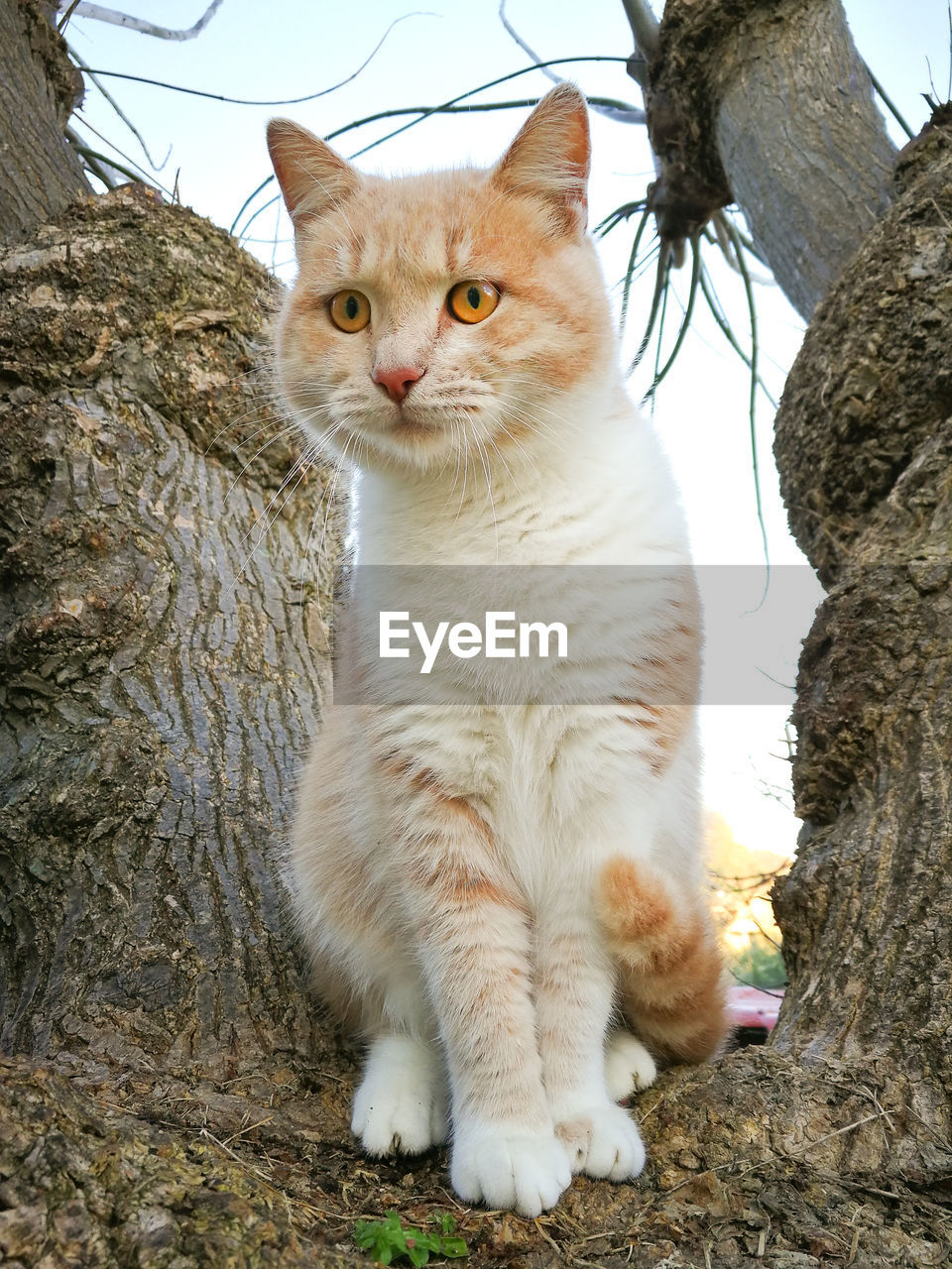 domestic cat, cat, feline, domestic, pets, mammal, domestic animals, vertebrate, one animal, sitting, people, tree, day, looking at camera, portrait, nature, looking, whisker