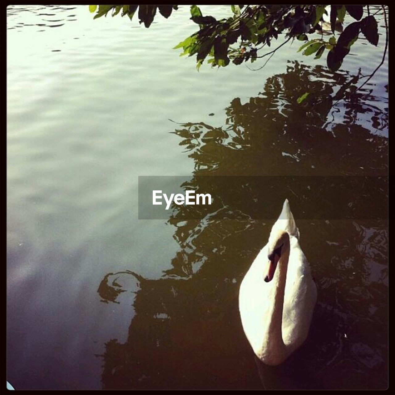 water, no people, day, outdoors, nature, animal themes, swimming, tree, close-up