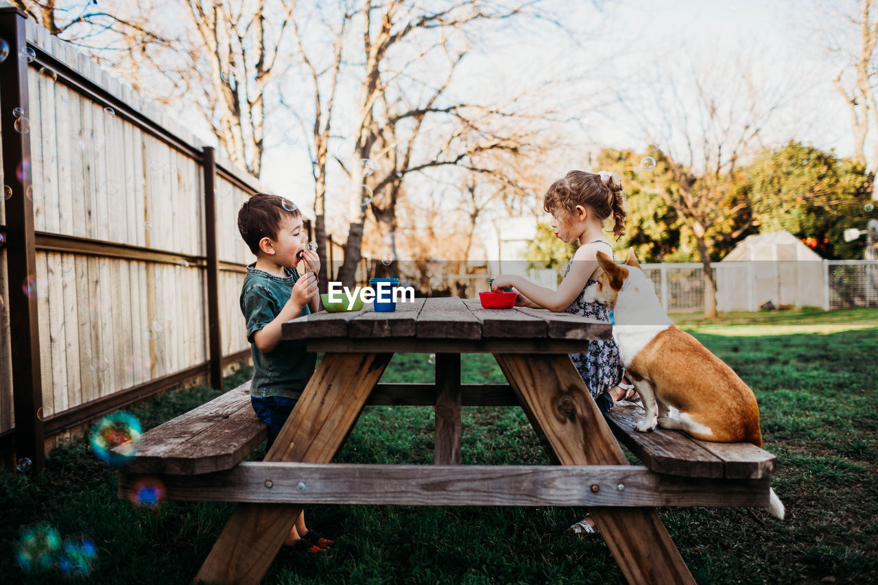 BOY SITTING ON WOODEN TABLE AND TREE