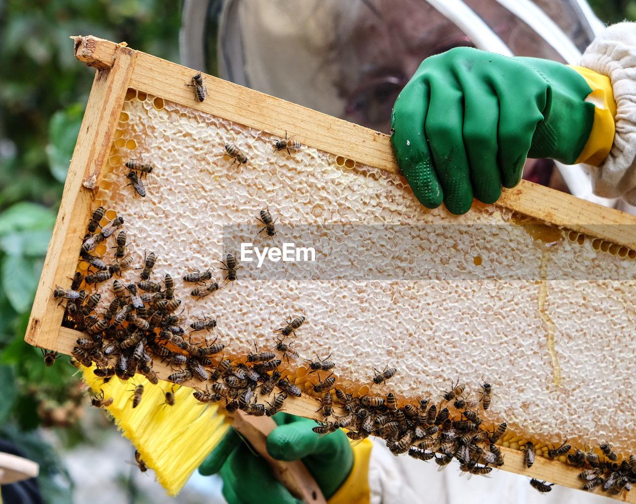 Beekeeper Holding Honeycomb Frame