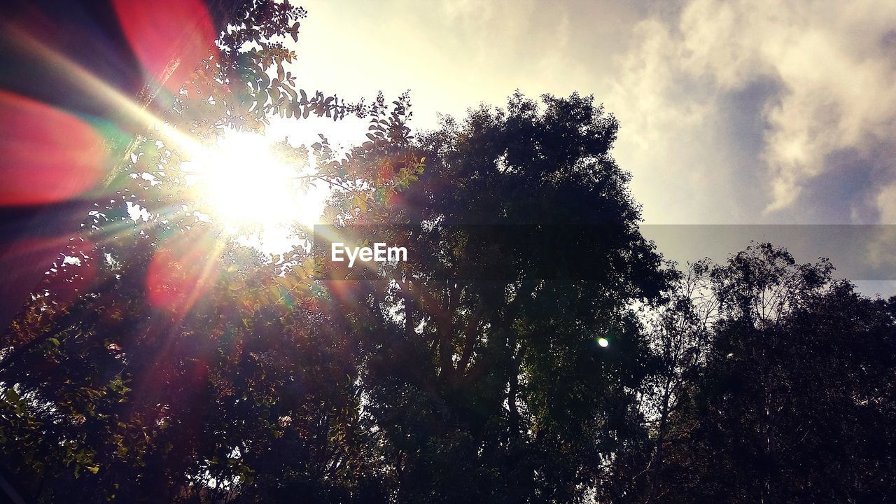 tree, sunbeam, sun, lens flare, sunlight, low angle view, sky, nature, growth, beauty in nature, outdoors, no people, day, tranquility, scenics, branch