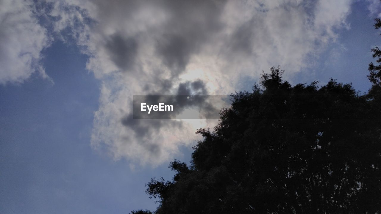 sky, tree, low angle view, cloud - sky, nature, beauty in nature, outdoors, day, tranquility, scenics, no people, silhouette