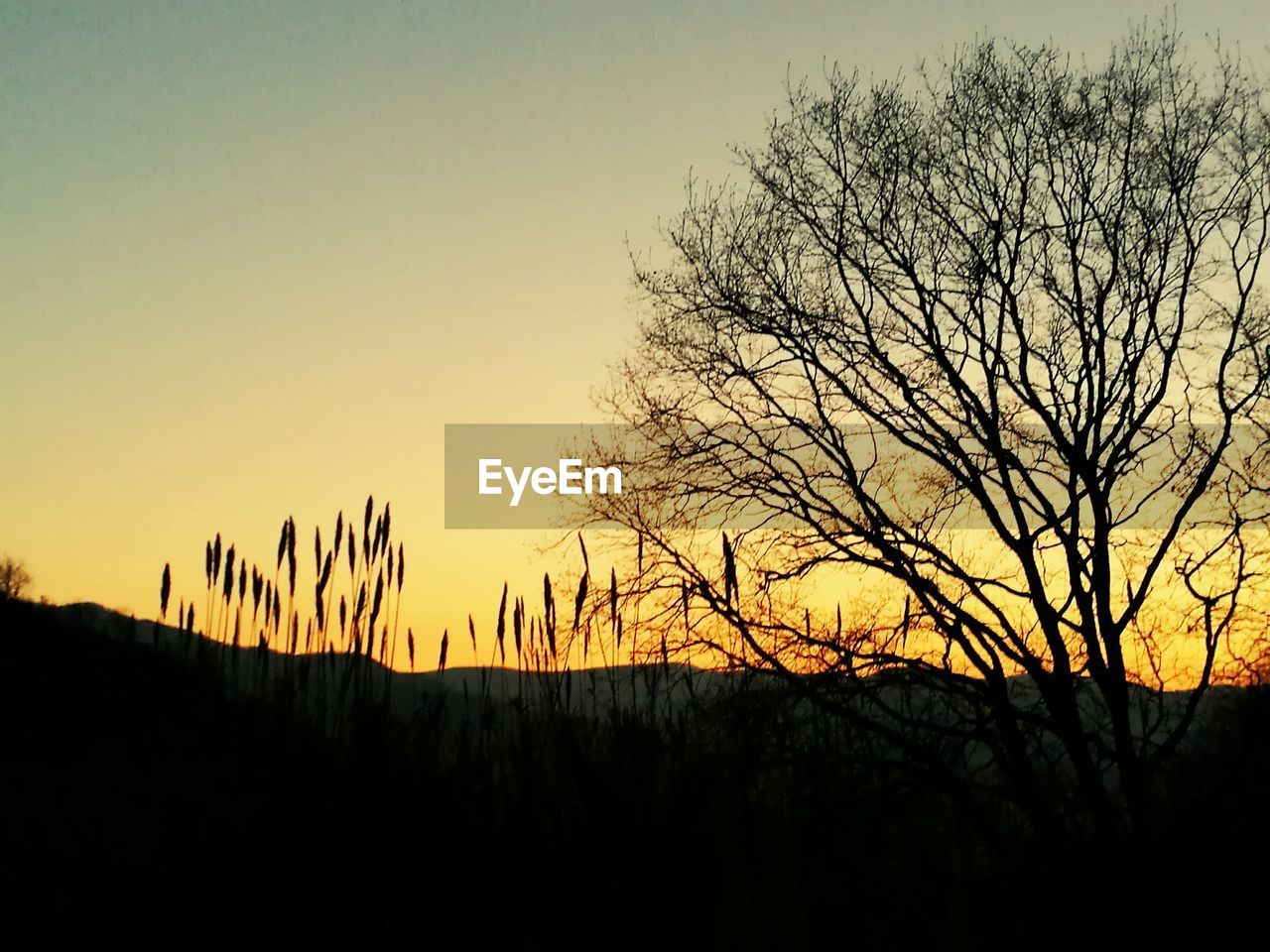 sunset, silhouette, beauty in nature, nature, scenics, tree, tranquility, tranquil scene, bare tree, sky, no people, outdoors, landscape, branch, clear sky, day
