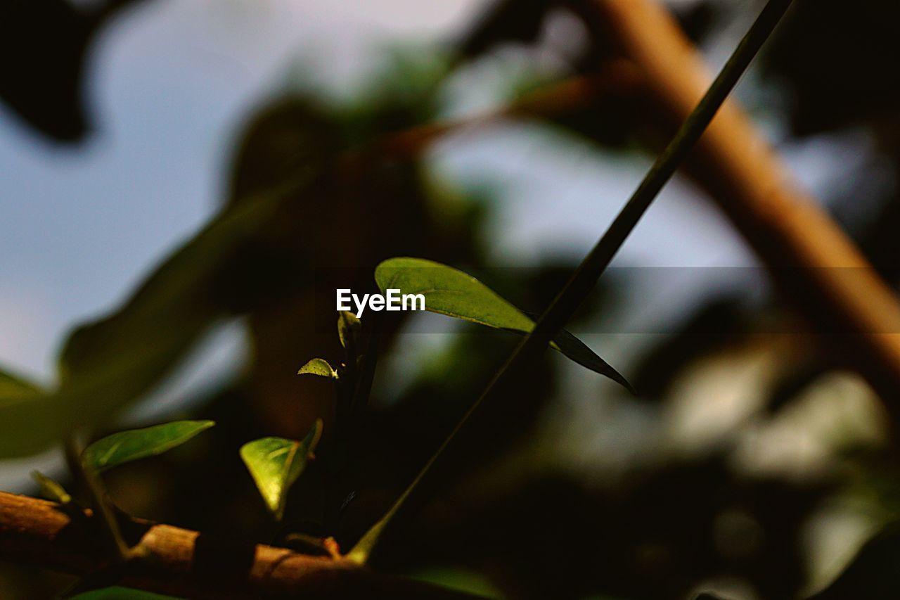 leaf, growth, plant, focus on foreground, close-up, green color, nature, fragility, day, no people, outdoors, beauty in nature, freshness, tree
