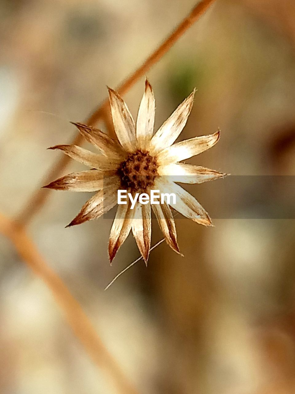 flower, nature, no people, growth, plant, close-up, fragility, flower head, outdoors, day, beauty in nature, freshness
