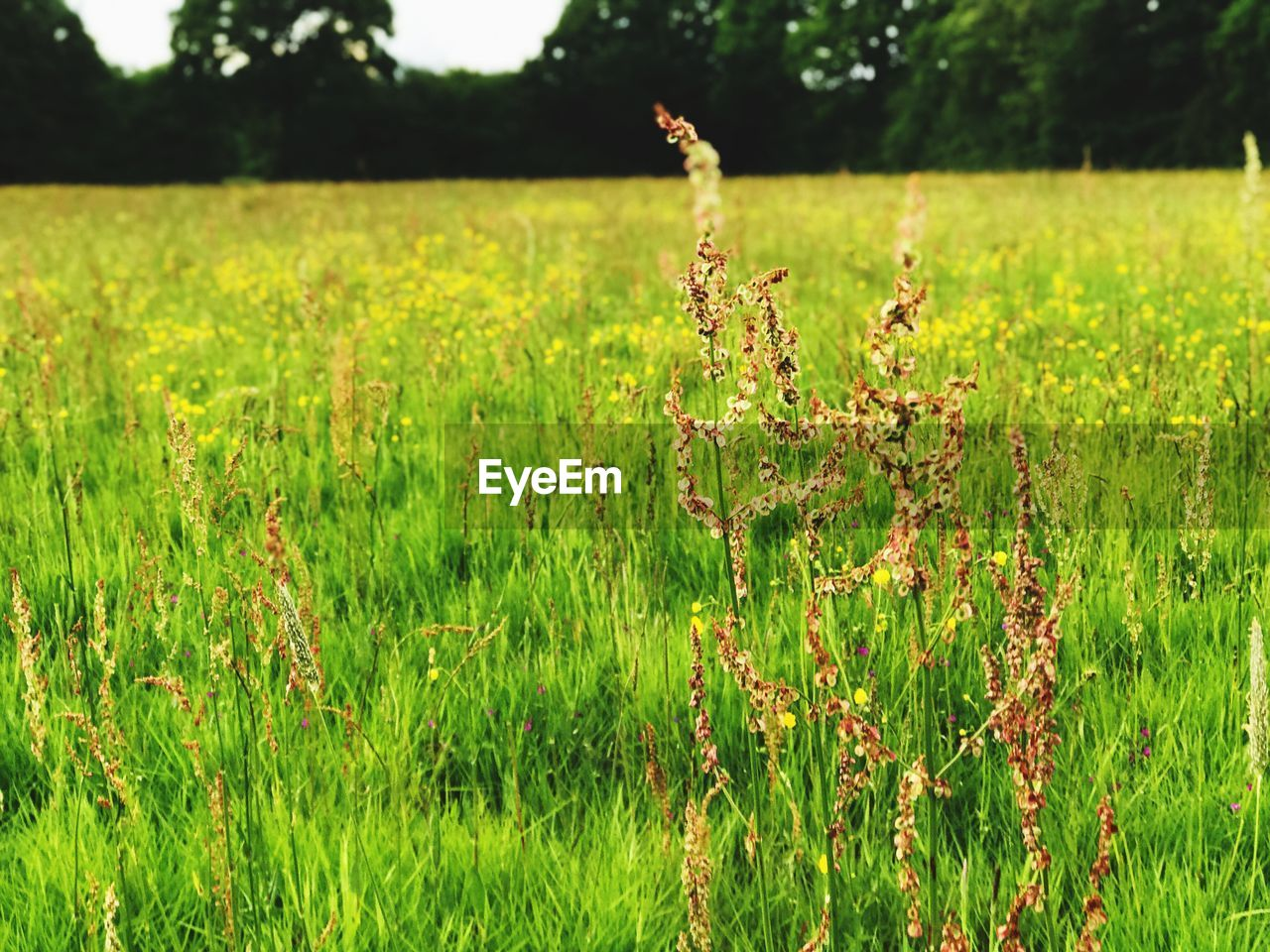 plant, field, growth, green color, land, beauty in nature, tranquility, focus on foreground, nature, landscape, grass, day, tranquil scene, no people, environment, outdoors, agriculture, rural scene, flower, freshness