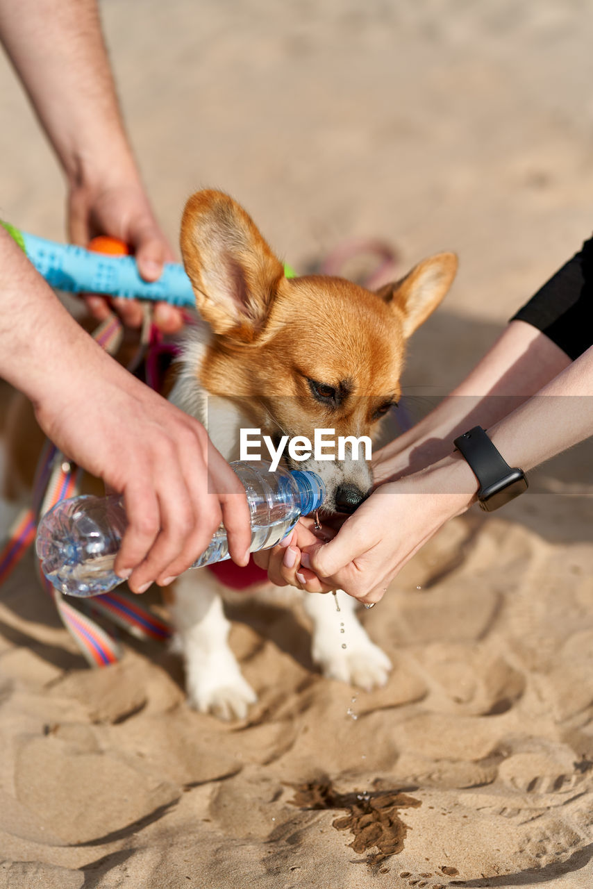 Dog greedily drinks water, owner pours liquid from bottle into palm of hand. taking care of animals