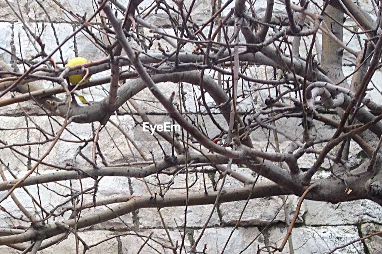 branch, bird, tree, animals in the wild, bare tree, one animal, perching, animal themes, day, animal wildlife, no people, outdoors, nature, beauty in nature, close-up