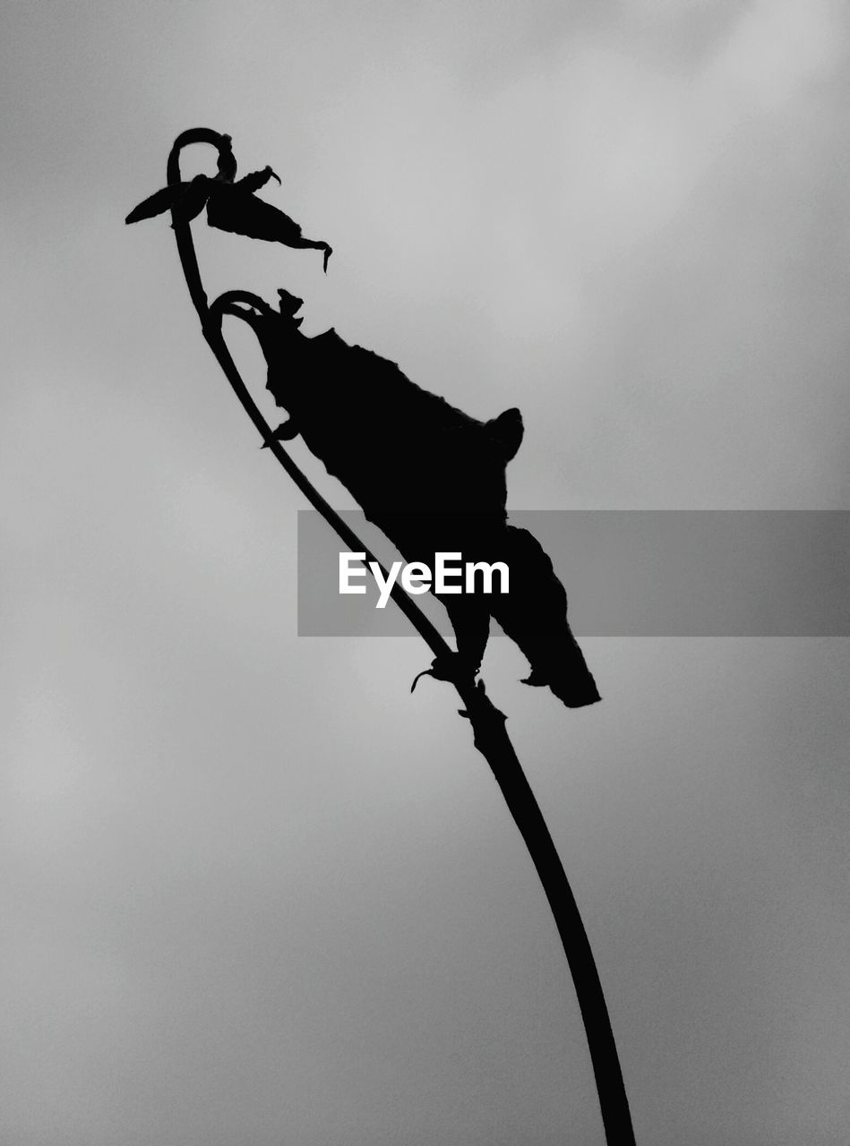 animal, animal themes, one animal, animal wildlife, sky, nature, silhouette, vertebrate, low angle view, no people, animals in the wild, bird, branch, dusk, full length, outdoors, plant, mammal, tree, primate