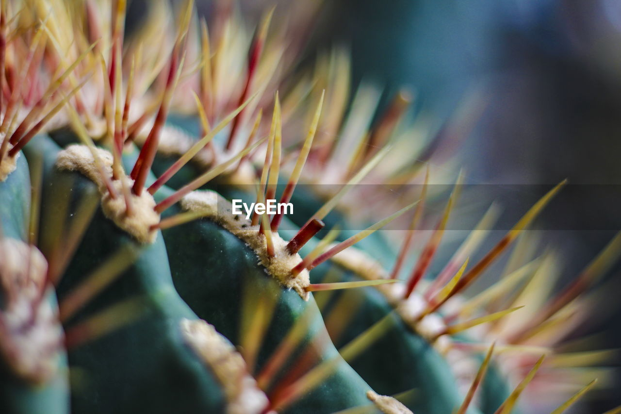 selective focus, close-up, plant, day, no people, growth, nature, beauty in nature, outdoors, animals in the wild, animal wildlife, one animal, animal, animal themes, plant part, leaf, green color, invertebrate, cactus, focus on foreground
