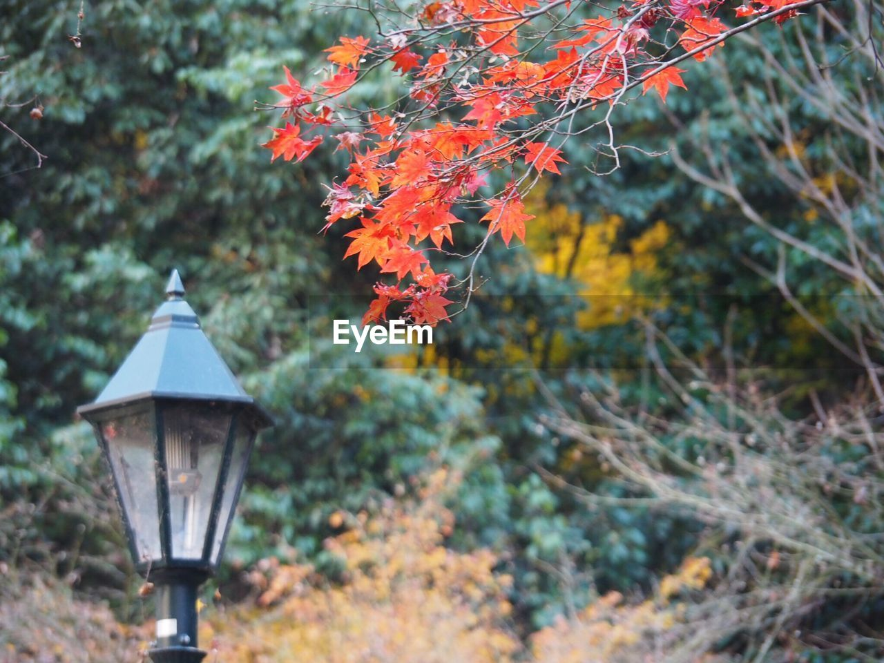 plant, change, tree, nature, autumn, focus on foreground, no people, growth, day, lighting equipment, beauty in nature, outdoors, leaf, plant part, orange color, branch, street light, forest, tranquility, land, electric lamp