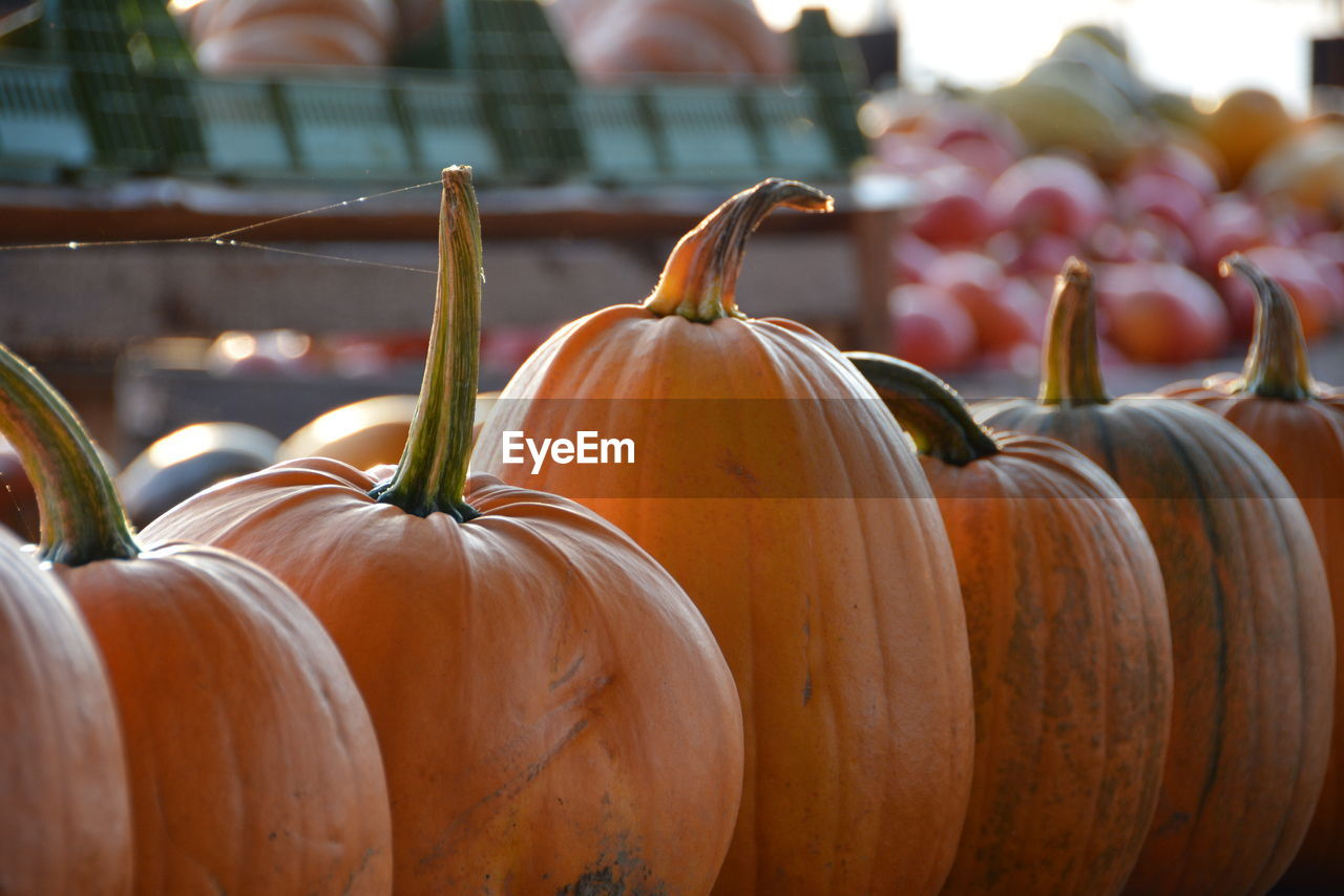 Close-Up Of Pumpkins In Row For Sale At Market