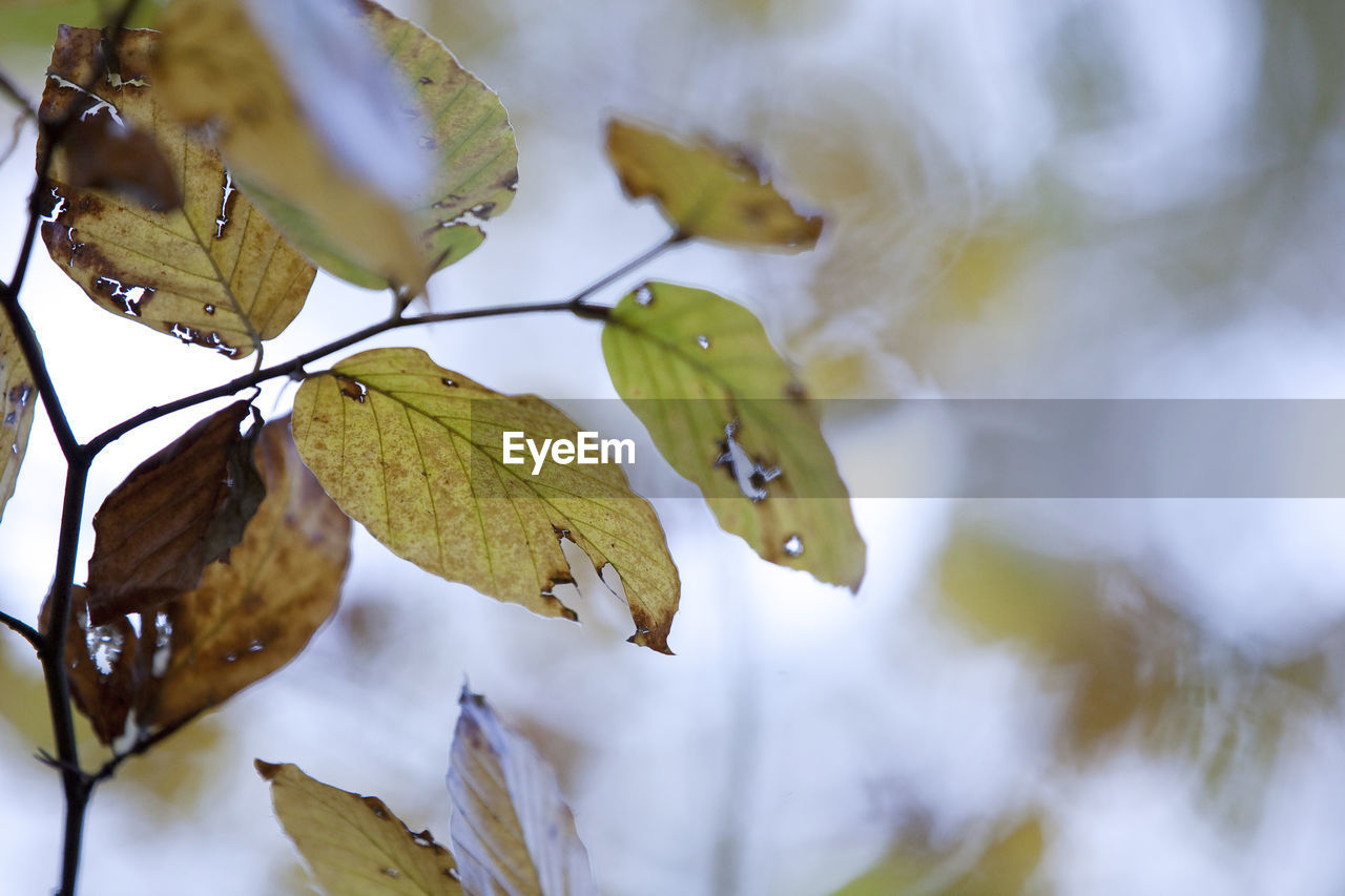 leaf, plant part, plant, growth, nature, close-up, focus on foreground, beauty in nature, no people, leaves, day, tree, tranquility, selective focus, autumn, outdoors, fragility, vulnerability, branch, change