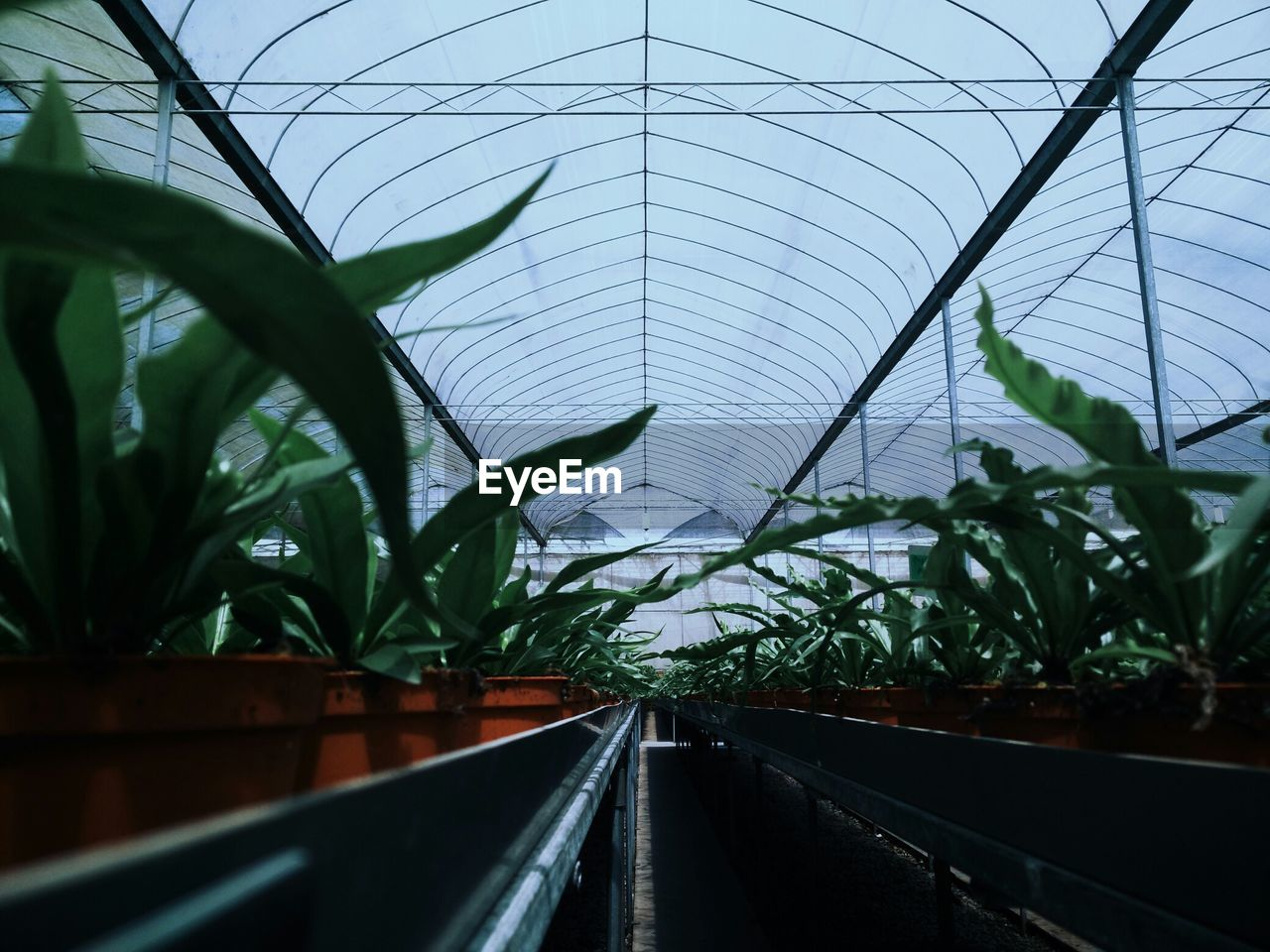 plant, the way forward, growth, leaf, day, nature, transportation, built structure, no people, green color, architecture, greenhouse, indoors, sky, beauty in nature, close-up