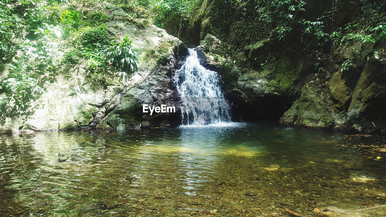 water, beauty in nature, tree, scenics - nature, forest, motion, nature, waterfall, land, flowing water, no people, plant, day, long exposure, rock, growth, non-urban scene, flowing, environment, outdoors, rainforest, power in nature, falling water
