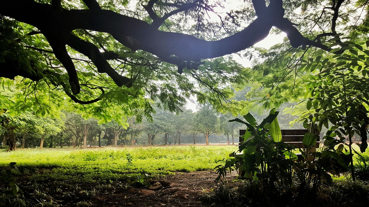 tree, nature, growth, field, day, no people, beauty in nature, tranquility, outdoors, green color, agriculture, scenics, landscape, grass, branch, sky
