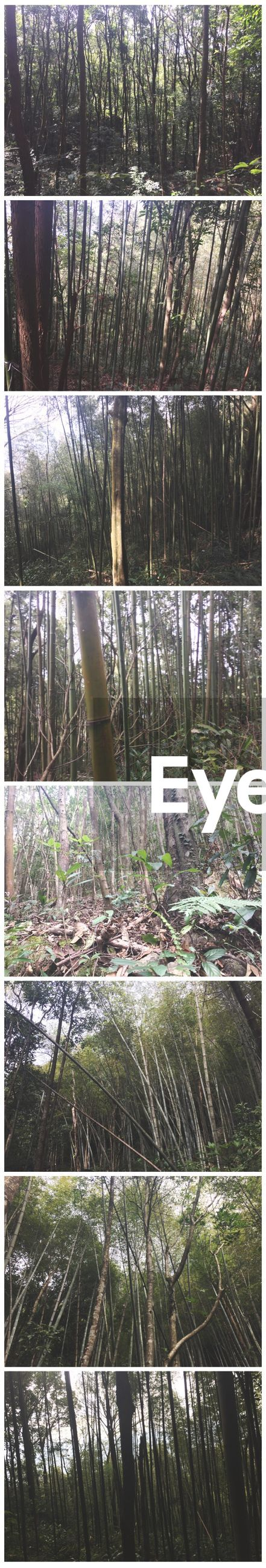 day, no people, outdoors, growth, nature, tree, greenhouse, bamboo grove