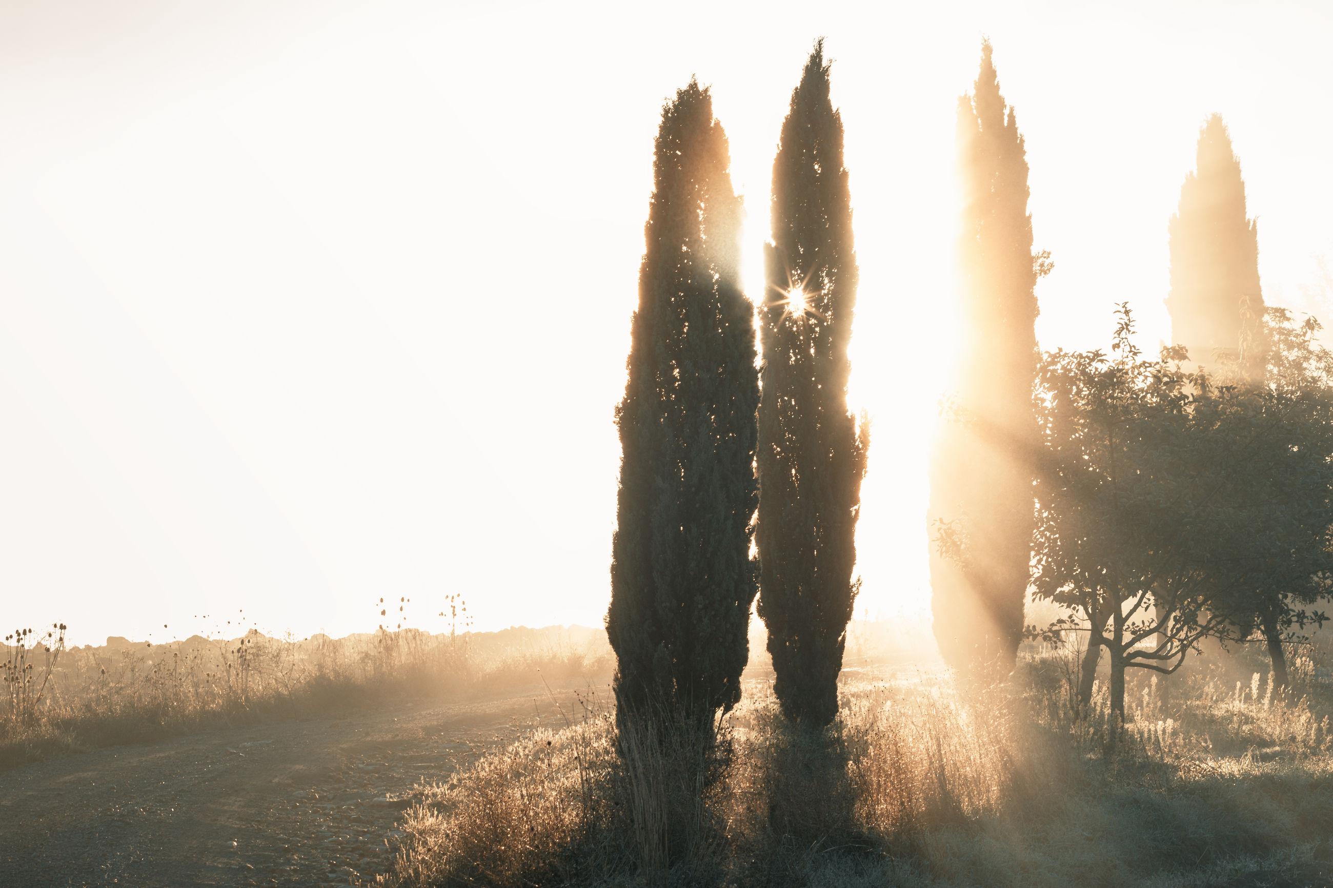 SUNLIGHT STREAMING THROUGH TREE ON FIELD AGAINST SKY
