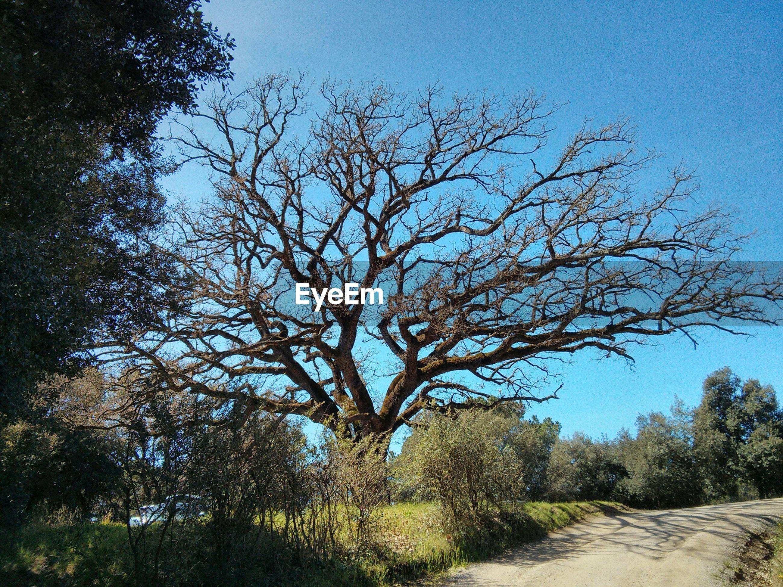 Narrow empty road along trees