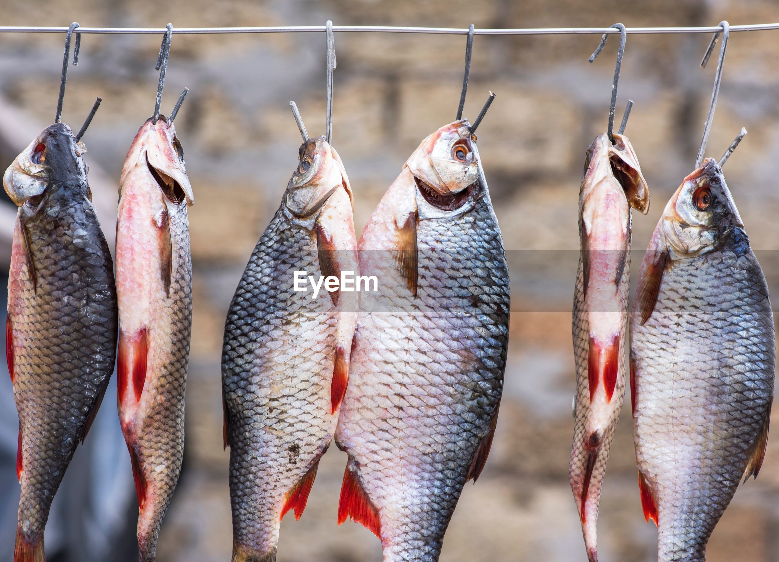 Close-up of fishes hanging on clothesline