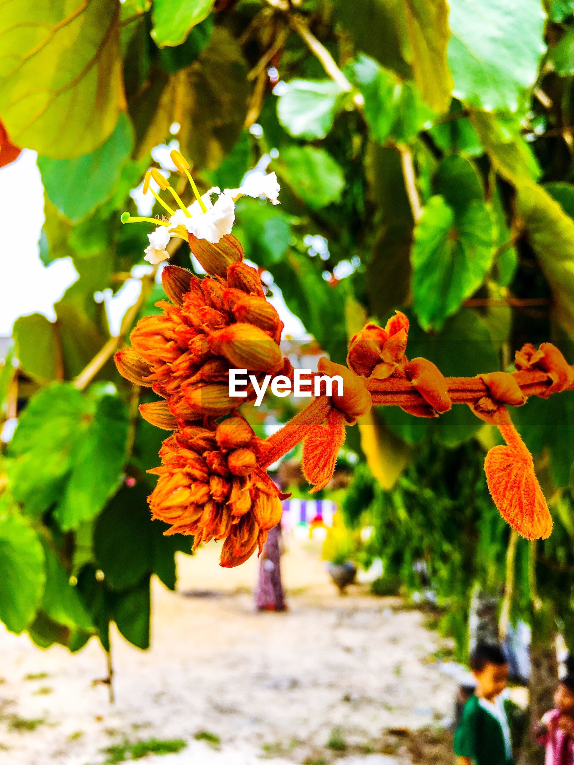 leaf, growth, freshness, flower, fruit, tree, nature, focus on foreground, plant, beauty in nature, orange color, branch, yellow, green color, close-up, day, fragility, outdoors, food and drink