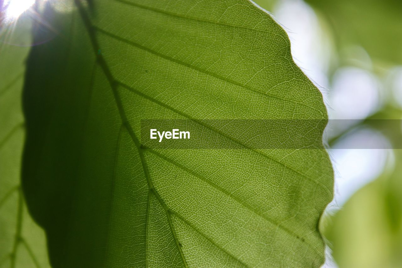 leaf, green color, close-up, growth, nature, day, outdoors, no people, freshness, beauty in nature