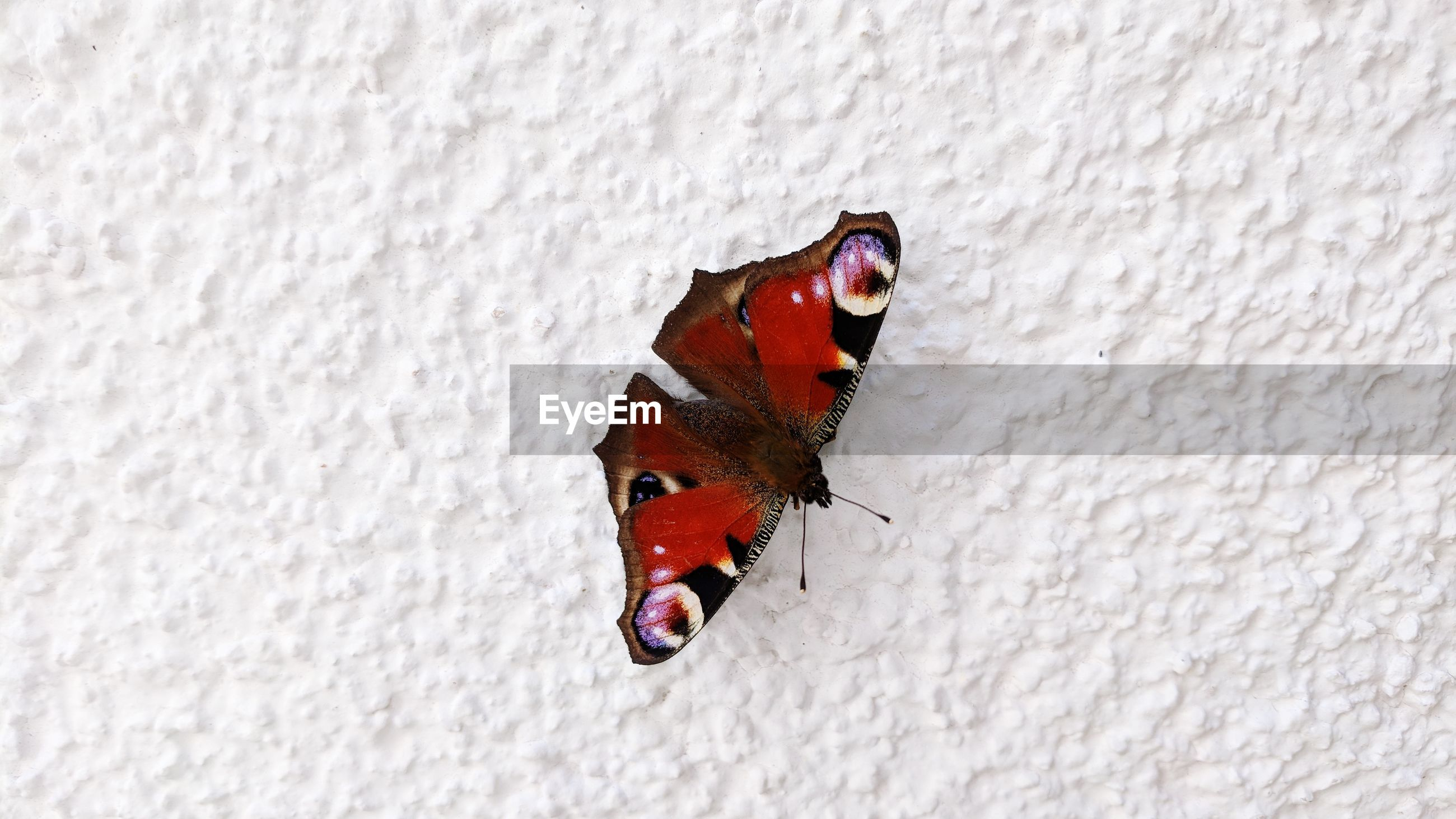 CLOSE-UP OF BUTTERFLY ON SNOW COVERED WALL