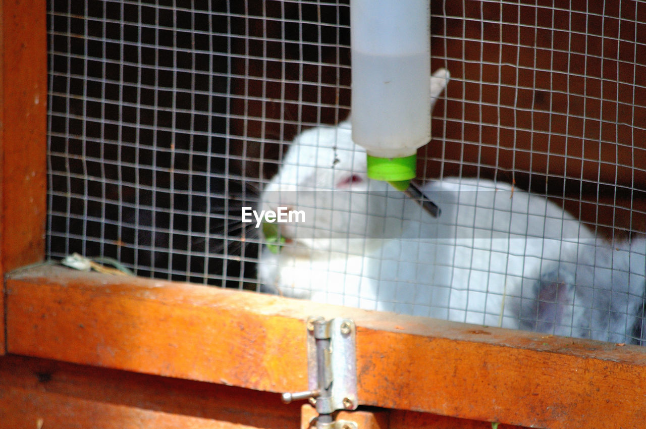 animal, animal themes, cage, vertebrate, animals in captivity, bird, animal wildlife, one animal, birdcage, pets, trapped, domestic, no people, mammal, metal, domestic animals, animals in the wild, close-up, parrot