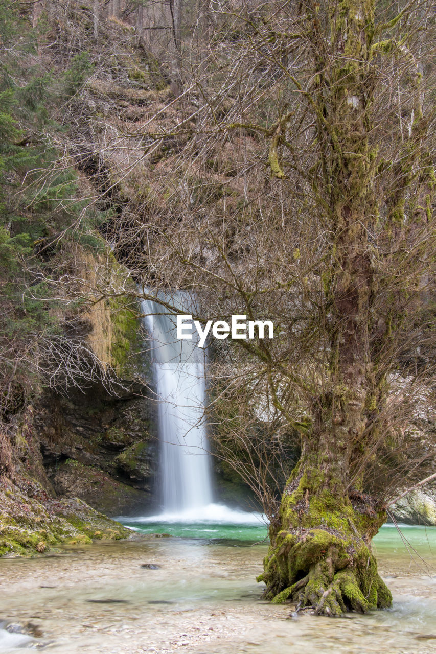 waterfall, tree, water, nature, scenics, beauty in nature, forest, outdoors, day, no people
