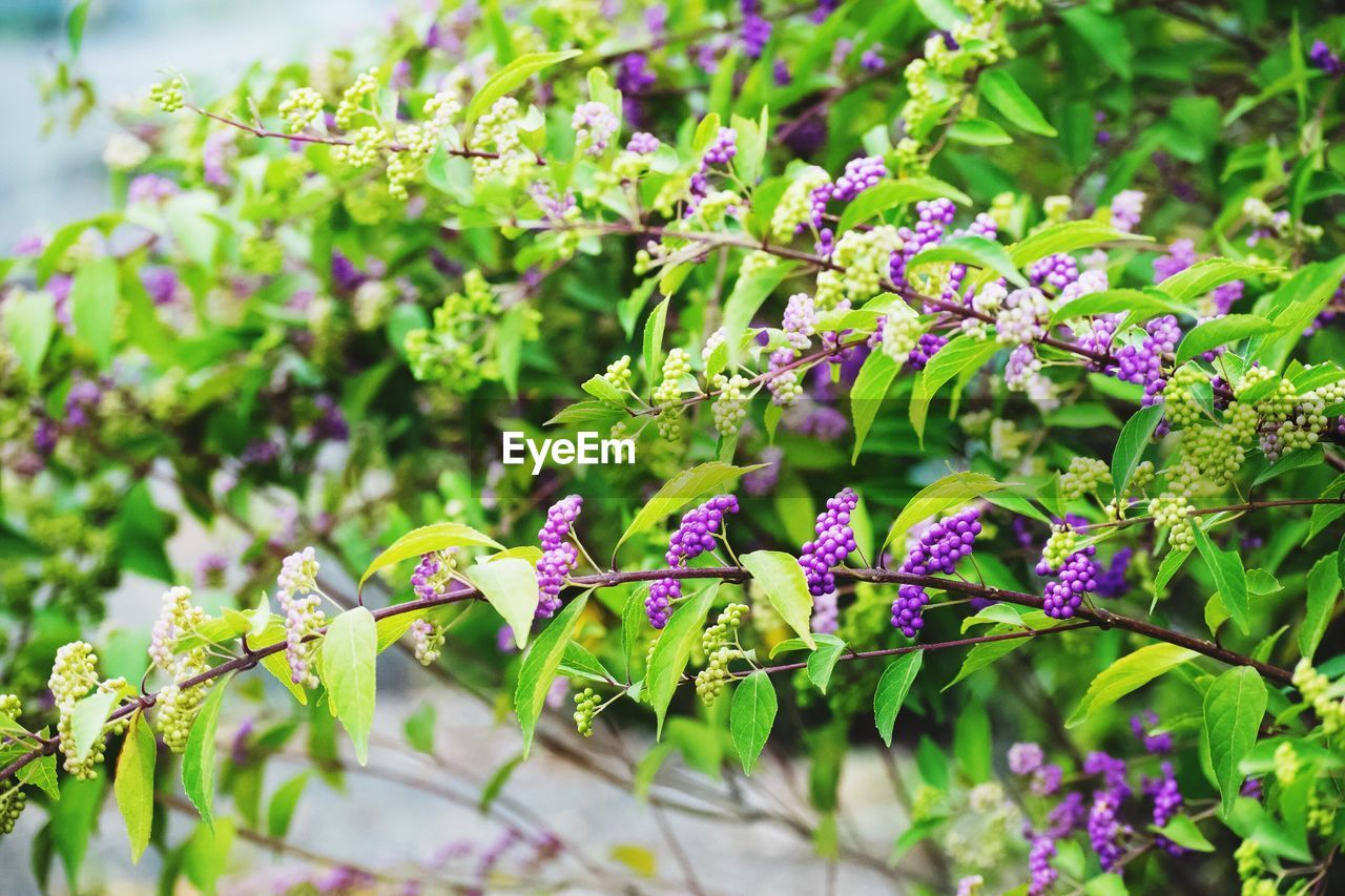 growth, nature, plant, beauty in nature, no people, day, outdoors, flower, green color, fragility, purple, close-up, leaf, freshness