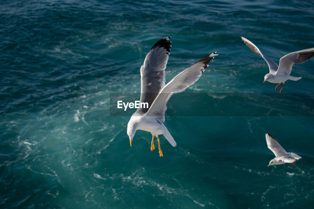 animal wildlife, animals in the wild, animal themes, water, group of animals, animal, vertebrate, sea, bird, flying, nature, no people, spread wings, day, underwater, swimming, three animals, outdoors, seagull, marine