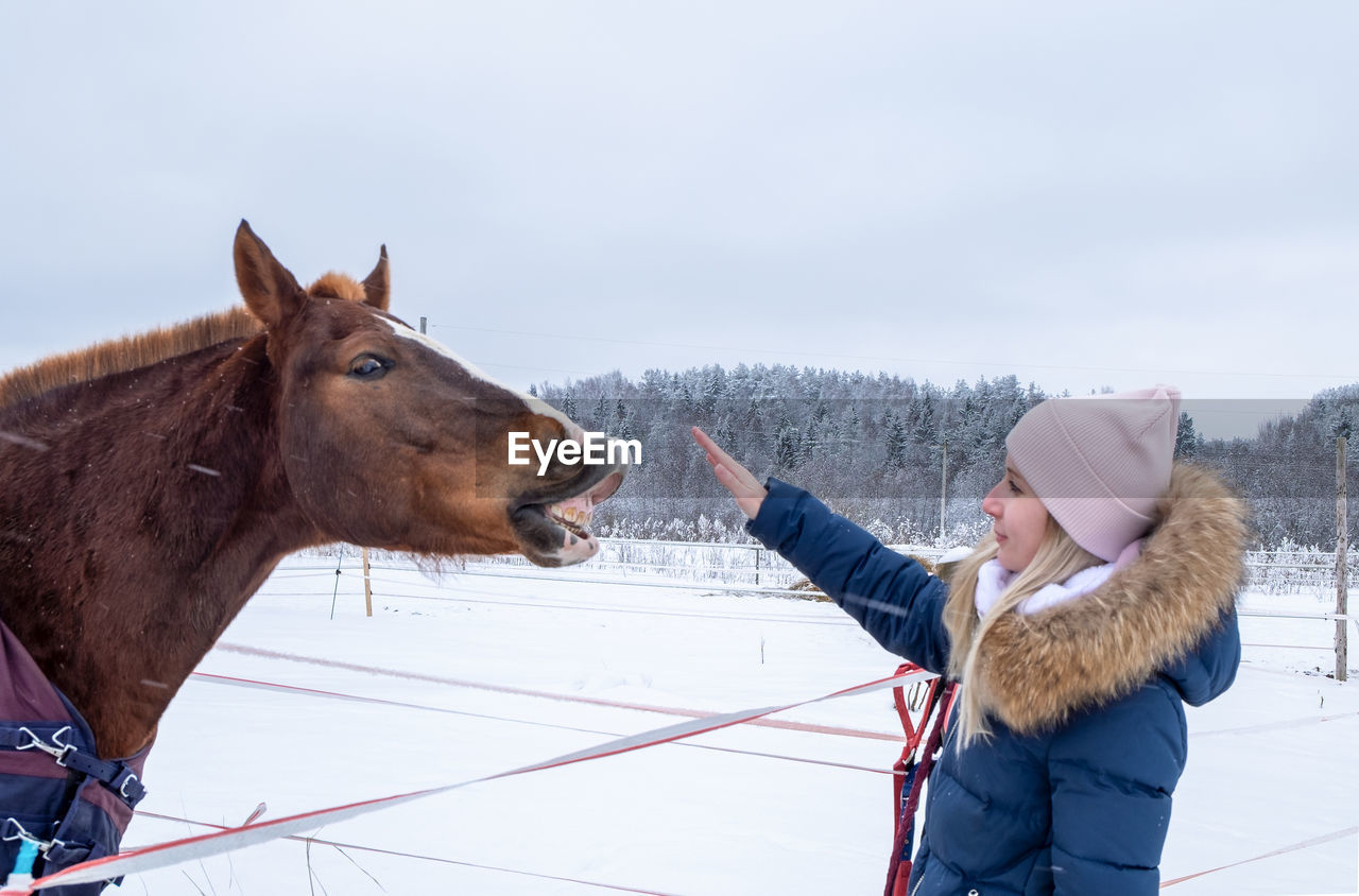 VIEW OF A HORSE