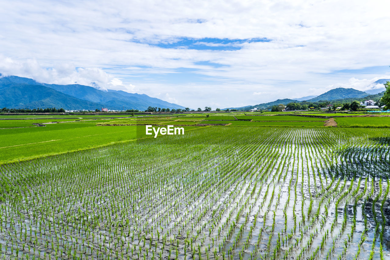 sky, scenics - nature, beauty in nature, tranquil scene, landscape, environment, cloud - sky, mountain, tranquility, agriculture, plant, rural scene, field, growth, land, nature, farm, mountain range, green color, day, no people, outdoors, plantation