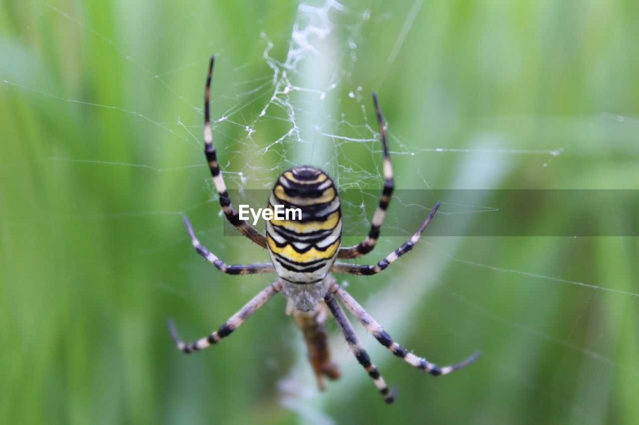 spider, spider web, one animal, animal themes, web, animals in the wild, nature, focus on foreground, survival, close-up, animal leg, day, outdoors, no people, insect, animal wildlife, beauty in nature, fragility